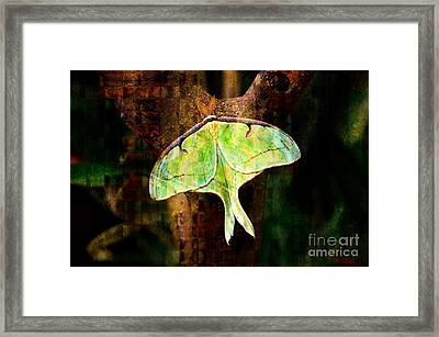 Abstract Luna Moth Painterly Framed Print by Andee Design