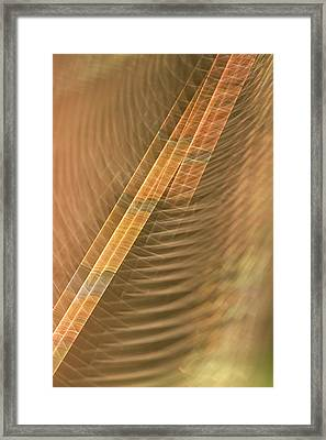 Abstract Of Spider Web In Redwood Framed Print by Phil Schermeister