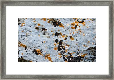 Abstract Orange Lichen 1 Framed Print by Chase Taylor