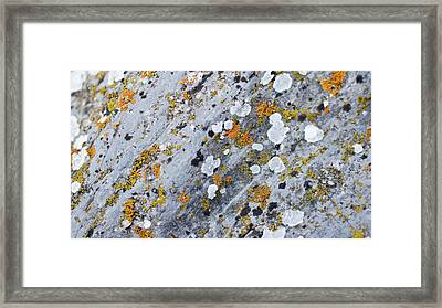 Abstract Orange Lichen 2 Framed Print by Chase Taylor