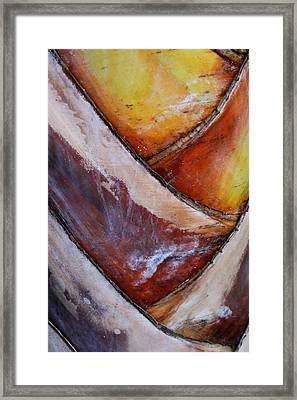 Framed Print featuring the photograph Abstract Palm 1 by Heather Green