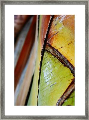 Framed Print featuring the photograph Abstract Palm 2 by Heather Green