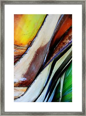 Framed Print featuring the photograph Abstract Palm 3 by Heather Green