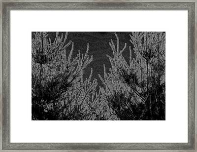 Abstract Pine Trees Framed Print