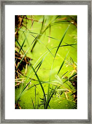 Abstract Pond Scum Framed Print by Marilyn Hunt