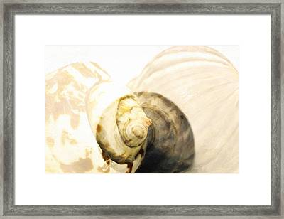 Abstract Sea Shells  Framed Print