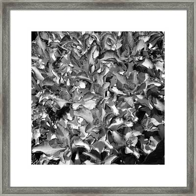 Abstract Sedum Framed Print by Mary Zeman