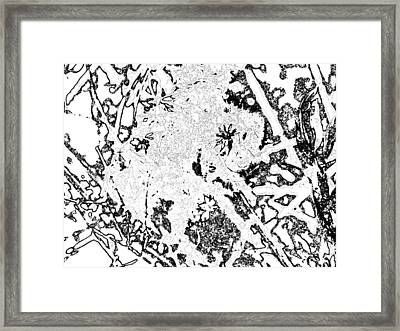 Abstract Seeds Framed Print by Jason Michael Roust