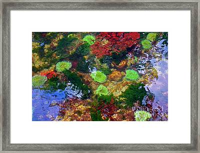 Abstract Tidal Pool Framed Print