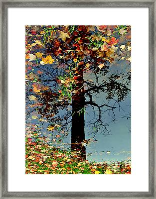 Abstract Tree Framed Print by Frozen in Time Fine Art Photography