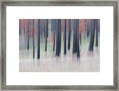 Abstract Trees Framed Print by Carolyn Dalessandro