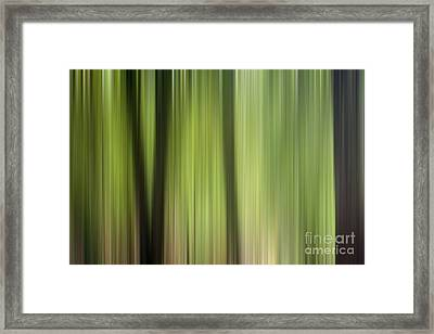 Abstract Trees In The Forest Framed Print by Natalie Kinnear