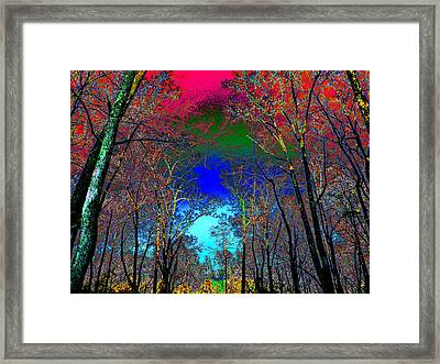 Abstract Trees Framed Print by Pete Trenholm