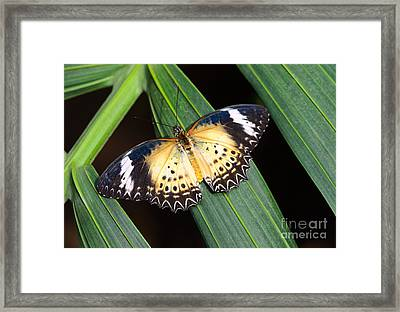 Butterfly On Leaves Framed Print by Tamara Becker