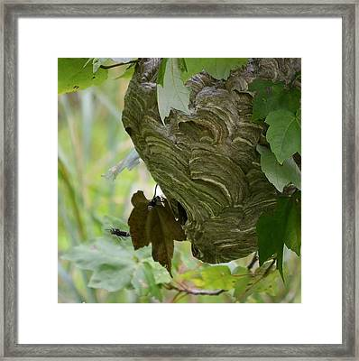 Abstract Wasp Framed Print by Mary Zeman