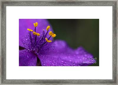Abundance Framed Print by Mary Lou Chmura