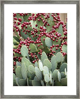 Framed Print featuring the photograph Abundance Of Fruit by Laurel Powell