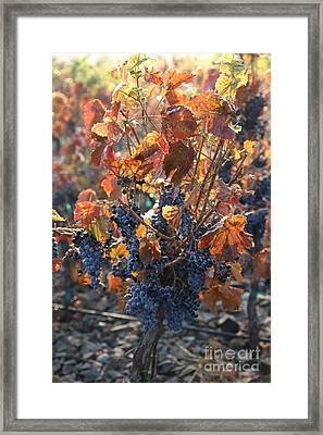 Abundant Harvest Framed Print by Carol Groenen