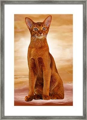 Abyssinian Cat Sorrel Color Framed Print