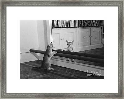 Abyssinian Kitten In Dance Studio Framed Print by Joan Baron