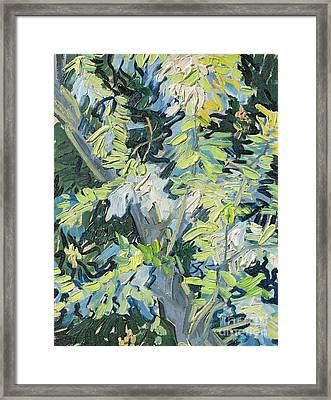 Acacia In Flower Framed Print