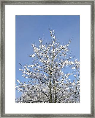 Ash Tree In Winter Framed Print