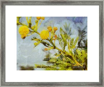 Acacia Framed Print by Kai Saarto