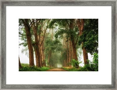 Acacia's In The Mist Framed Print