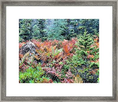 Acadia Ferns Framed Print