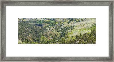 Acadia National Park - Mont Desert Island - Spring Forest - Maine Framed Print
