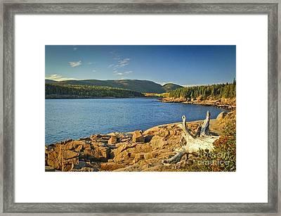 Acadia Otter Cove Framed Print by Alana Ranney