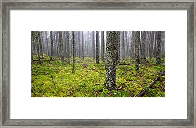 Acadia Woods Framed Print by Patrick Downey
