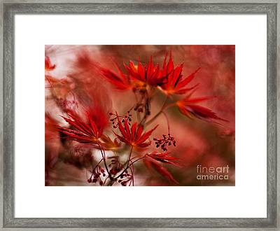 Acer Storm Framed Print by Mike Reid