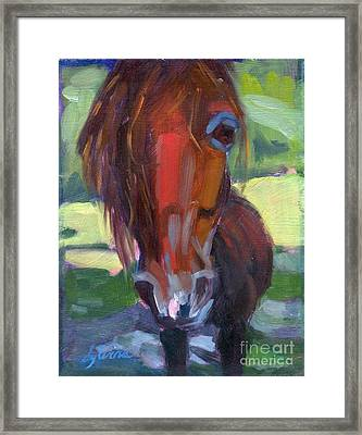 Ace's Face Framed Print by Sylvina Rollins