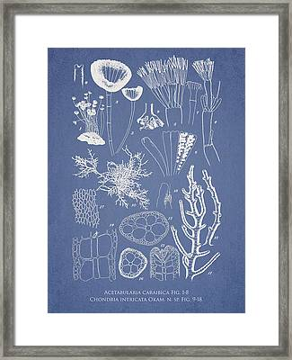 Acetabularia Caraibica And Chondria Intricata Framed Print by Aged Pixel