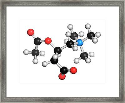 Acetylcarnitine Nutritional Supplement Framed Print by Molekuul