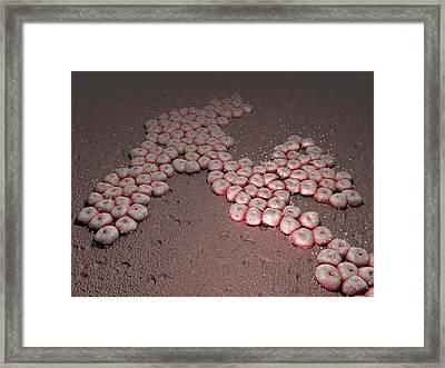 Acinetobacter Baumannii Bacteria Framed Print