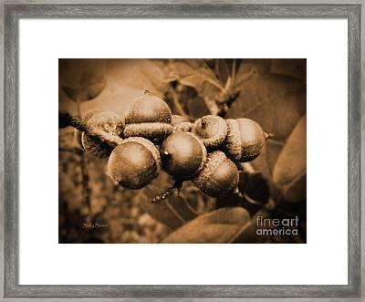 Acorn 2 Framed Print