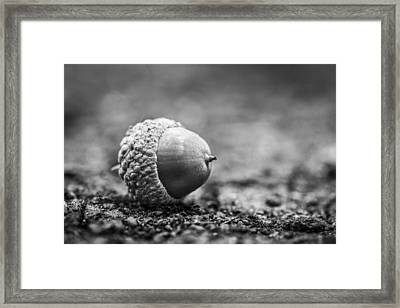 Framed Print featuring the photograph Acorn. by Gary Gillette