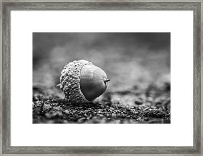 Acorn. Framed Print