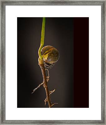 Acorn Gives Birth Framed Print by Don Wolf