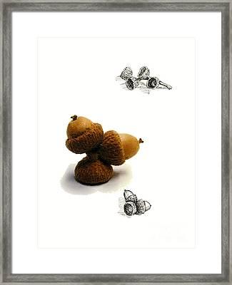 Acorns  Framed Print by Adam Long