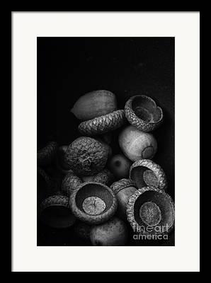Nut Trees Framed Prints