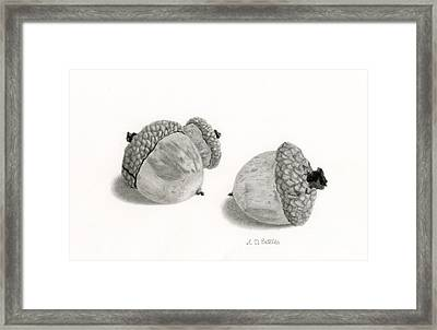 Acorns- Black And White Framed Print by Sarah Batalka