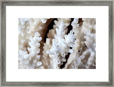 Acropora Paniculata Framed Print