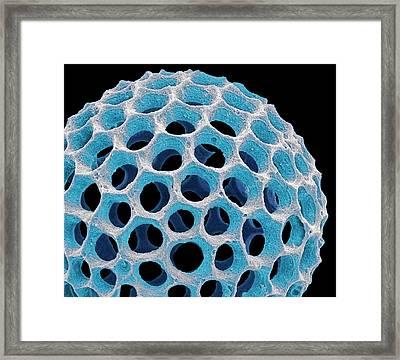 Acrospaera Radiolarian Framed Print by Steve Gschmeissner