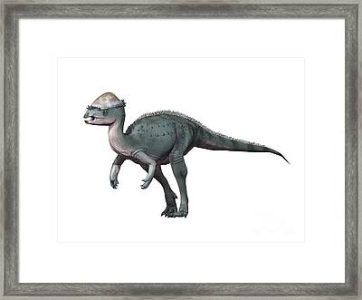 Acrotholus Audeti, Late Cretaceous Framed Print by Nobumichi Tamura