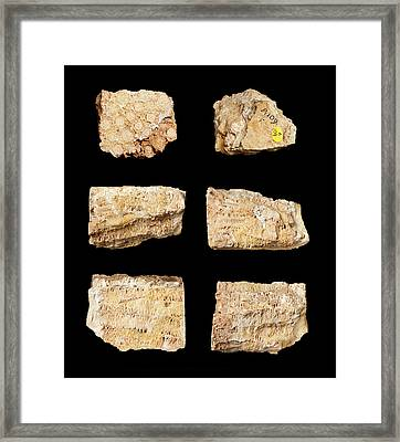 Actinocyathus Borealis Framed Print by Natural History Museum, London