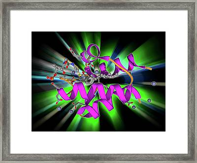 Acyl Carrier Protein Molecule Framed Print