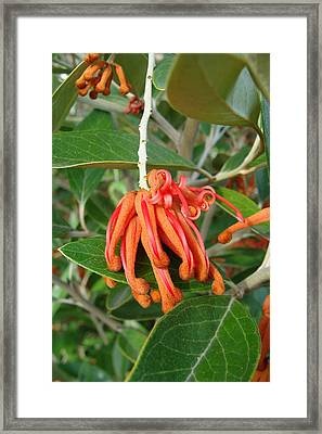 Adaptable Exotic Framed Print by Cheryl Hoyle